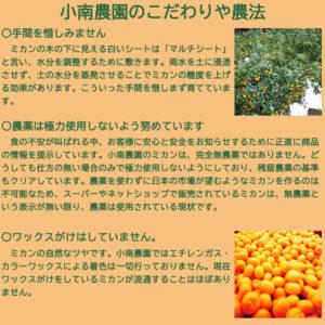 蜜柑きんとん(寒天ゼリー) セット 110g×6個 みかんゼリー_03